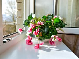 Flowering houseplants