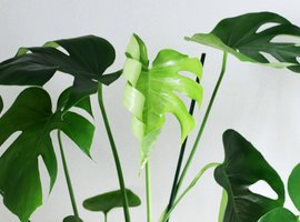 Shade loving houseplants